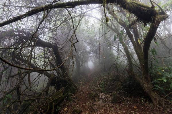 Tropical rainforest plants Stock Photo 03