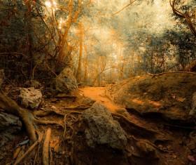 Tropical rainforest plants Stock Photo 06