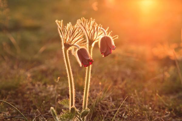 Two beautiful wildflowers close up Stock Photo