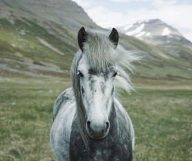 White horses on the plateau Stock Photo
