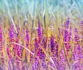 Wildflower close-up Stock Photo