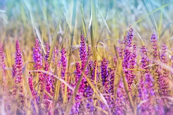 Wildflower close up Stock Photo