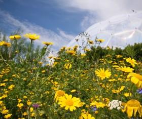 Wildflower meadow Stock Photo 01