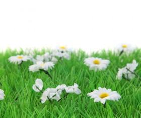 Wildflower meadow Stock Photo 02