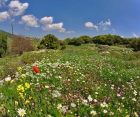 Wildflower meadow Stock Photo 03