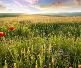 Wildflower meadow Stock Photo 04