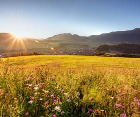 Wildflower meadow Stock Photo 06