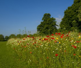Wildflower meadow Stock Photo 07