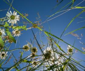 Wildflower meadow Stock Photo 08