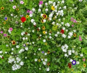 Wildflower meadow Stock Photo 09