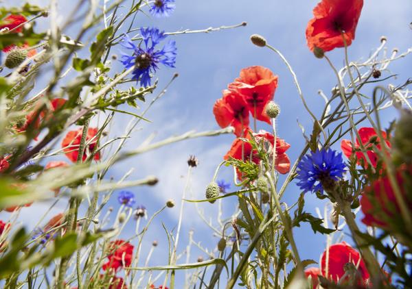 Wildflower meadow Stock Photo 10