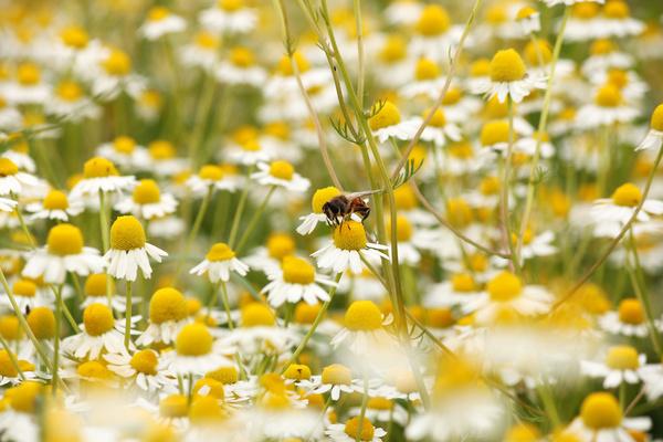 Wildflower meadow Stock Photo 11
