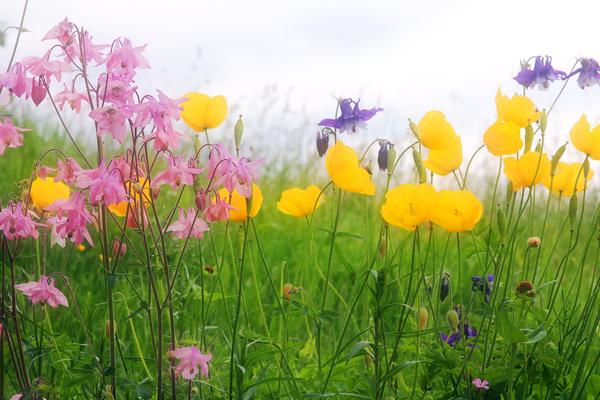 Wildflower meadow Stock Photo 12