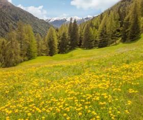 Wildflower meadow Stock Photo 13