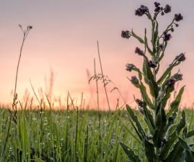 Wildflower meadow Stock Photo 14
