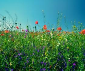 Wildflower meadow Stock Photo 15