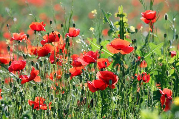 Wildflower meadow Stock Photo 16