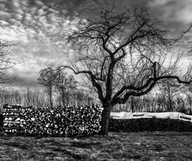 Winter trees landscape black and white picture Stock Photo