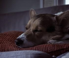 cute sleeping dog Stock Photo