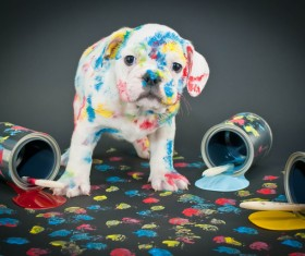 A spotted puppy Stock Photo