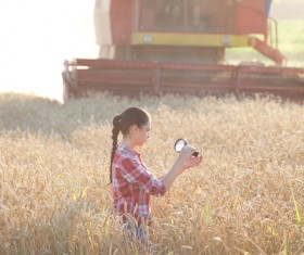 Agronomist checking the fullness of millet Stock Photo
