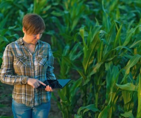 Agronomist examines in cornfield Stock Photo 01