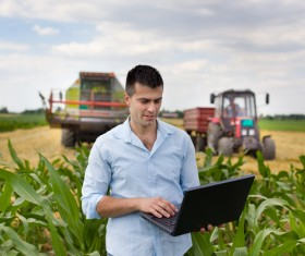 Agronomist examines in cornfield Stock Photo 02