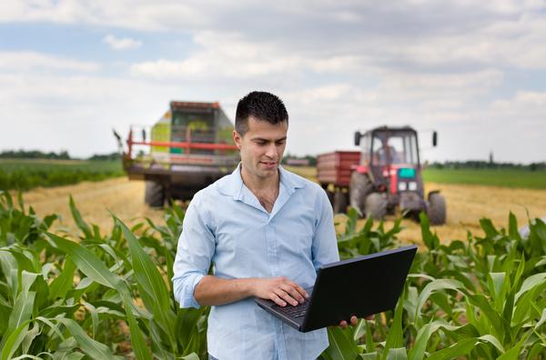 Agronomist examines in cornfield Stock Photo 02