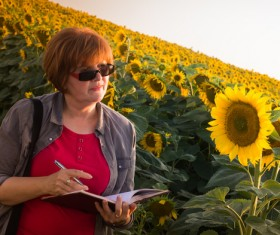 Agronomist farmer view sunflower Stock Photo