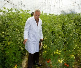 Agronomist in the greenhouse Stock Photo