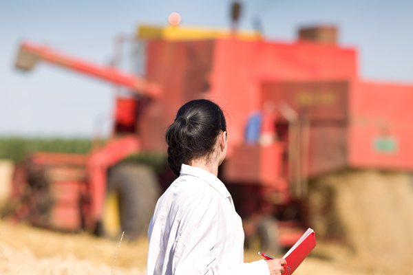 Agronomist looking at the harvest of crops Stock Photo