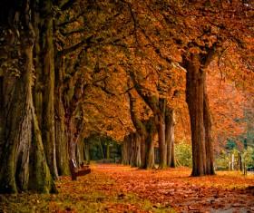 Beautiful autumn gold Stock Photo 01