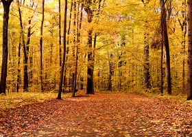 Beautiful autumn gold Stock Photo 03