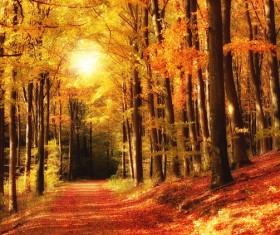 Beautiful autumn gold Stock Photo 04