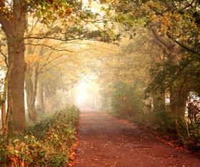 Beautiful autumn gold Stock Photo 05
