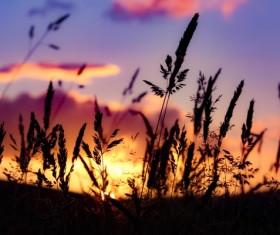 Closeup of wild grass at dusk Stock Photo