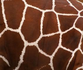 Cortical Decorative pattern Stock Photo