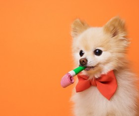 Cute dog wearing a bow tie Stock Photo