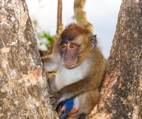 Cute wild monkey Stock Photo