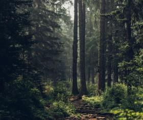 Empty quiet woodland scene Stock Photo