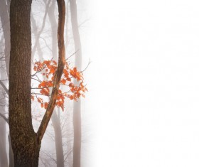 Flowers and trees in misty autumn landscape Stock Photo