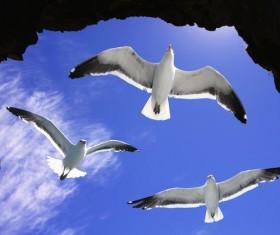 Flying wild birds Stock Photo