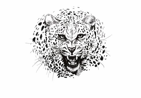 3a661cc26 Leopard head vector illustration 01 free download
