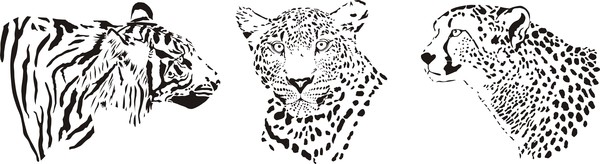 Leopard head vector illustration 02
