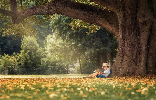 Little boy leaning on a tree reading a book Stock Photo
