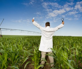 Man cheering in cornfield Stock Photo