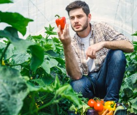 Man picking vegetables in greenhouse Stock Photo