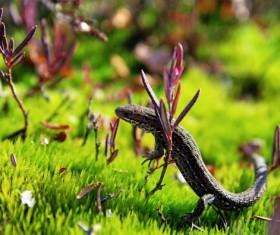 Meadow Wild Lizard Stock Photo