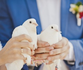 Newly-married couple holding white pigeons Stock Photo