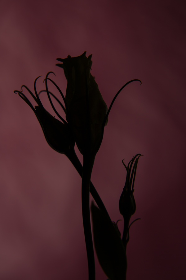 One flower on a dark background Stock Photo 10